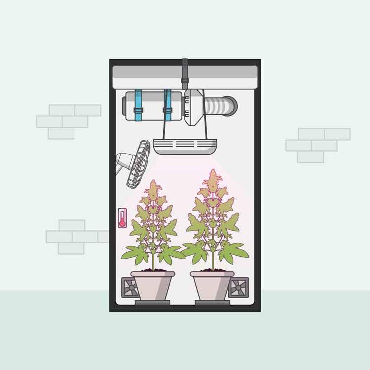closet cannabis grow ventilation system
