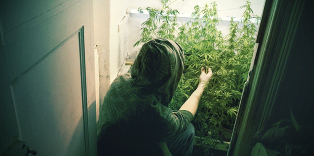 how to grow weed in a closet