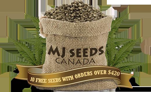 canadian marijuana seed bank