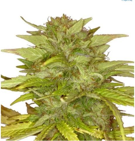 exotic weed