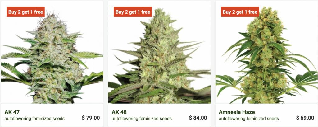 WeedSeedsExpress Seed Selection