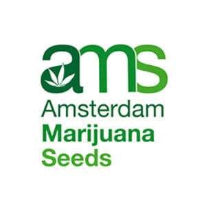 AmsterdamMarijuanaSeeds.com Review