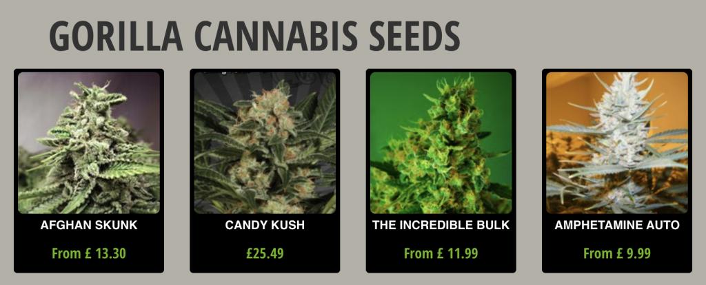 Gorilla Seeds Seed Bank Seed Selection