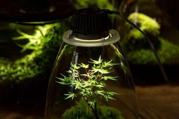 Wattage needed to grow cannabis