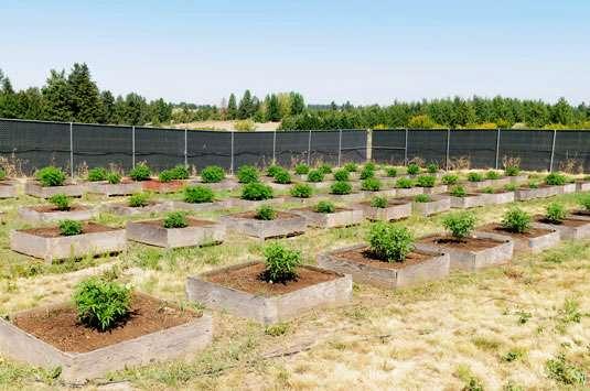 high heat cannabis grow